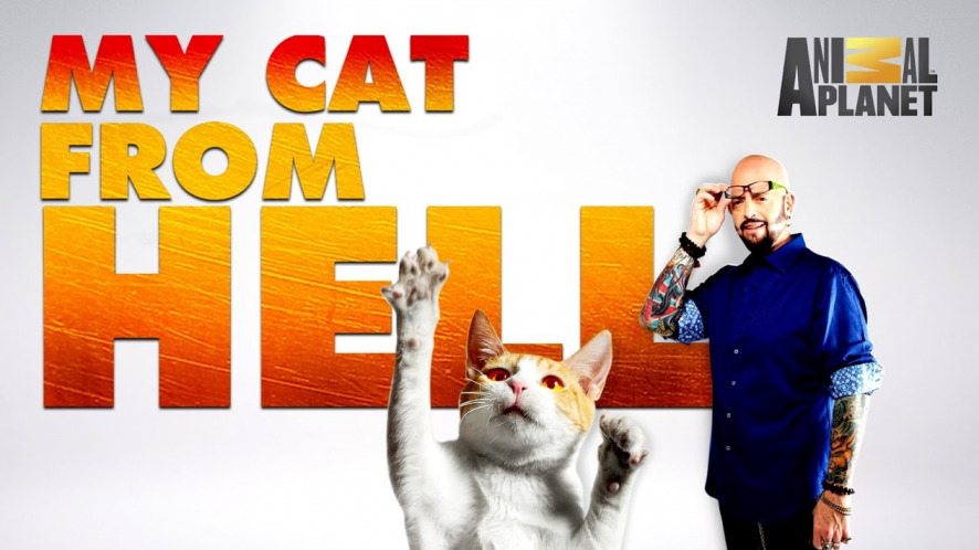 watch my cat from hell season 9  2017  free on 123movies net